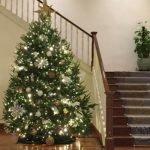 TCG Christmas Tree
